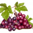 Grape cluster — Stock Vector #11481727