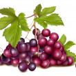 Stock Vector: Grape cluster