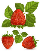 Strawberries with leaves — Stock Vector