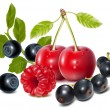 Photo-realistic vector of cherries, black currant, raspberry and blueberries with leaves. — Stock Vector