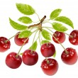 Branch of ripe cherries with water drops and leaves. — Stock Vector