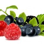 Forest berries. — Stock Vector