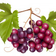 Royalty-Free Stock Vector Image: Grape cluster with green leaves.