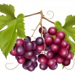 Grape cluster with green leaves. — Stock Vector #11521212