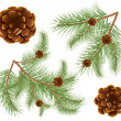 Vector illustration of pine cones with pine needles - Stock vektor