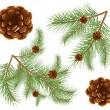 Vector illustration of pine cones with pine needles - Stok Vektör