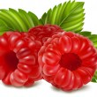 Ripe raspberries — Stock Vector
