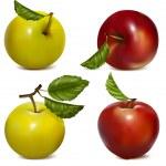 Vector set of fruits — Stock Vector #11521573