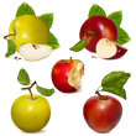 Vector set of fruits — Stock Vector #11521575