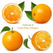 Oranges with leaves — Stock Vector #11521628