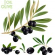 Stock Vector: Black olives with leaves.
