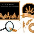 Vector wheat ears collection — Stock Vector