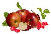 Vetor frutos — Vetor de Stock