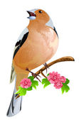 Bird on the flowering branch. — Stock Vector