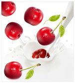 Cerezas rojas maduras cayendo en el chapoteo lechoso. — Vector de stock