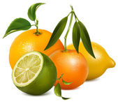 Vector citrus fruits. — Stock Vector