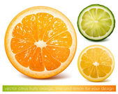 Vector citrus fruits. — Stok Vektör