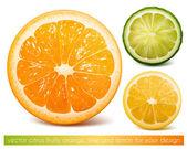 Vector citrusvruchten. — Stockvector