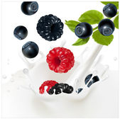 Ripe forest berries falling into the milky splash. — Stock Vector