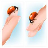 Ladybird on the hands. — Stock Vector