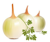 Photorealistic vector of onion. — Stock Vector