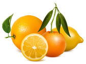 Vector fresh ripe oranges with leaves — Stock Vector