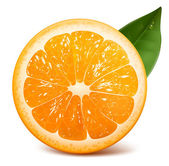 Fresh ripe orange — Vector de stock