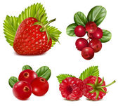 Set of red berries with leaves. — Vector de stock