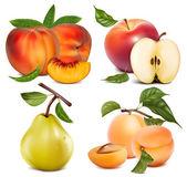 Vektor-reihe von früchten — Stockvektor