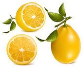Fresh lemons with leaves. — Stock Vector