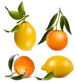Vector tangerines and lemons with leaves. — Stock Vector