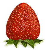 Strawberry. — Stock Vector