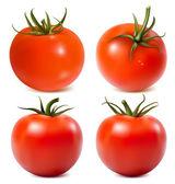 Ripe tomatoes — Stock Vector