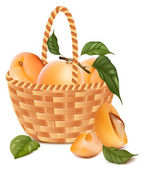 Ripe apricots with leaves in the basket. — Stock Vector
