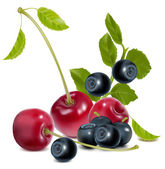 Photo-realistic vector of cherries and blueberries with leaves — Stock Vector