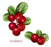Cowberries with leaves. — Stock Vector