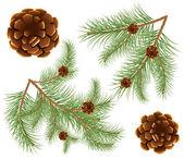 Ilustración vectorial de piñas con agujas de pino — Vector de stock