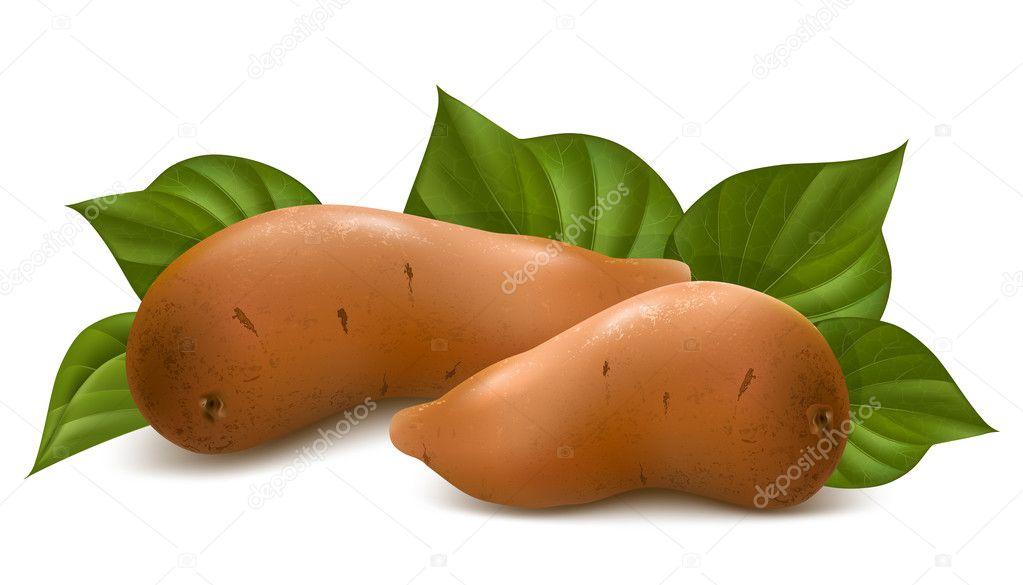 a sweet potato筒笔画