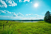 Green Field Landscape with Lake — Stock Photo
