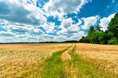 Clouds and Shadows dancing on Fields — Stock Photo