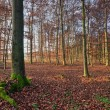 Winter in Fairytale Beech Forest — Stock Photo