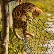 Stock Photo: Breakout - Kitten climbing on Fence
