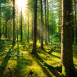 Sunburst in Fairytale Forest — Stock Photo