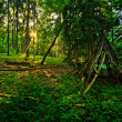 Kid´s Wigwam in Fairytale Forest — Stock Photo