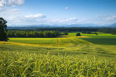 Green Field Landscape, Mountain View — Stock Photo