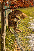 Breakout - Kitten climbing on Fence — Stock Photo