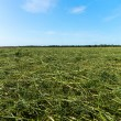 Mowed Grass - Green Filed — Stock Photo