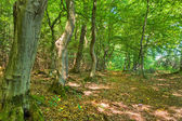 Path in Woods - Fairytale Forest — Foto Stock