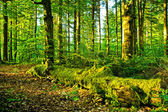 Natural Forest — Stock Photo