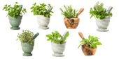 Set Of Garden Herbs — Stock Photo